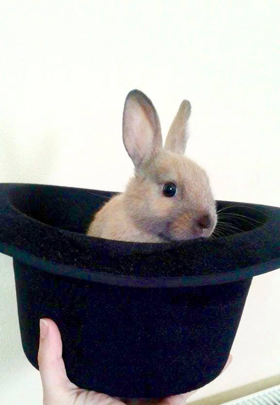 Фокусы с кроликом